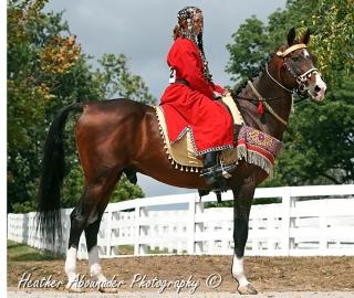 Akhal_Teke_Stallion_-_Goklen.jpg