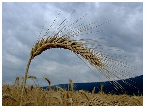 agriculture_avec_les_centres_d_initiatives_pour_valoriser_l_agriculture_et_le_milieu_rural_civam_une_agriculture_vivante_et_solidaire_est_possible.jpg