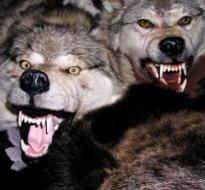 BENOIT XVI loups.jpg
