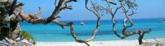 cropped-arbre-et-mer4.jpg