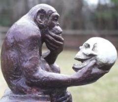 l'homme-descend-du-singe.jpg